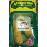 明豐-上品超甜玉米/種子