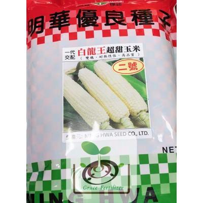 白龍王超甜玉米種子