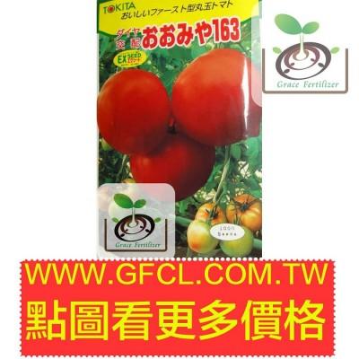 日本桃太郎番茄163- おおみや163 日本野菜育苗協會推薦品種