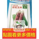 彩虹玉米(台農5號糯玉米)種子(商品缺貨中,到貨時間無法確認)