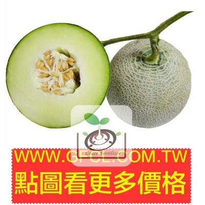 綠肉哈密瓜