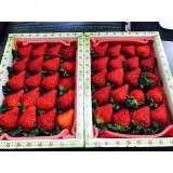青其有機農場  草莓