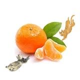 柑橘類植物栽培
