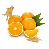 柑橘類植物栽培 2