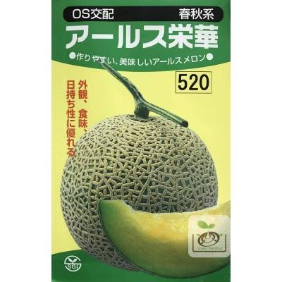日本埼玉阿露斯哈蜜瓜