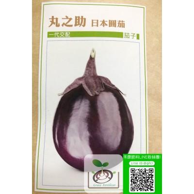 丸之助 日本圓茄(蛋茄)
