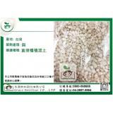 綠肥玉米種子