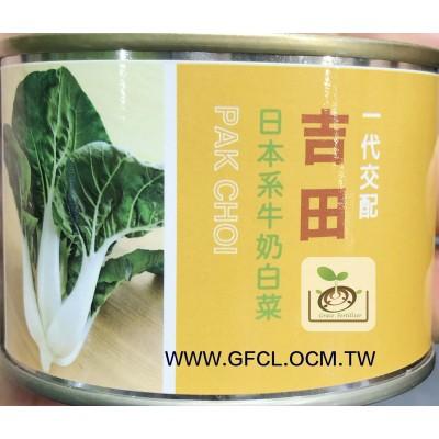 吉田日本系牛奶白菜(黑葉白菜)