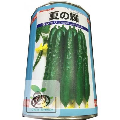 日本-夏之輝小黃瓜