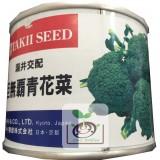 日本巨無霸青花菜