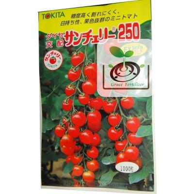 日本櫻桃番茄250- サンチェリ-250