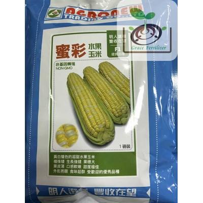 蜜彩水果玉米