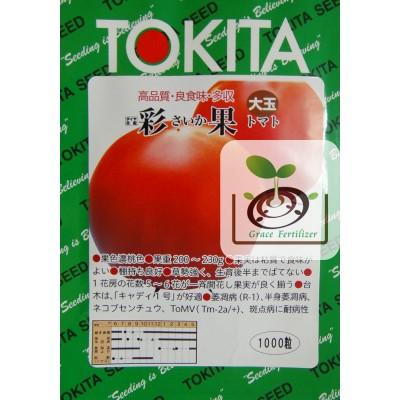 日本桃太郎番茄-彩果