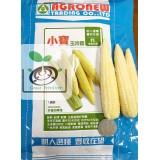小寶(玉米筍)種子