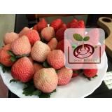 桃薰草莓苗  請直接跟尋莓園或是沐光農場訂購
